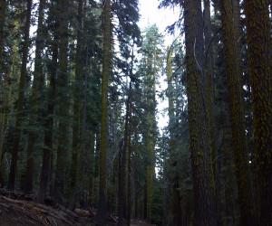 Sampling the Sierra Trail Race Route